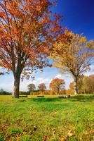 大湯環状列石の紅葉の木立 22320041174  写真素材・ストックフォト・画像・イラスト素材 アマナイメージズ