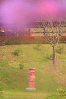 タプコプ創遊村のコスモス越しの郵便ポストと古民家 22320041282| 写真素材・ストックフォト・画像・イラスト素材|アマナイメージズ