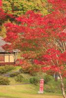 タプコプ創遊村の郵便ポストと古民家とモミジの紅葉 22320041306| 写真素材・ストックフォト・画像・イラスト素材|アマナイメージズ