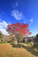 タプコプ創遊村の古民家とモミジの紅葉 22320041311| 写真素材・ストックフォト・画像・イラスト素材|アマナイメージズ