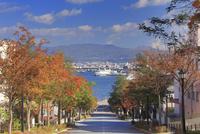 秋の八幡坂 22320041458  写真素材・ストックフォト・画像・イラスト素材 アマナイメージズ