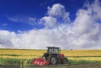 ヒマワリ畑の鋤込み作業 22320041716| 写真素材・ストックフォト・画像・イラスト素材|アマナイメージズ