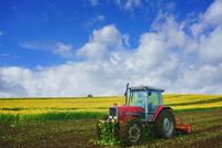 ヒマワリ畑の鋤込み作業 22320041717| 写真素材・ストックフォト・画像・イラスト素材|アマナイメージズ