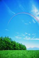青空に架かる虹と草原と木