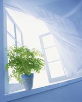 窓辺 22321012391| 写真素材・ストックフォト・画像・イラスト素材|アマナイメージズ