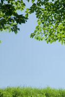空と緑 22321015788| 写真素材・ストックフォト・画像・イラスト素材|アマナイメージズ