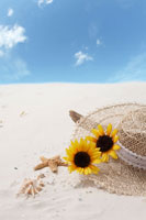 砂浜に流木と貝殻とヒマワリと帽子