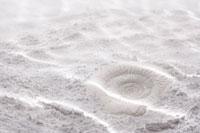 海底イメージ 砂に貝