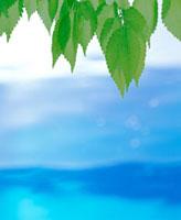 若葉と青い水面