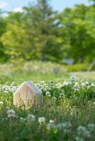 草原に置いた木の模型の家
