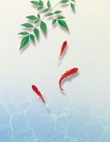 金魚 22323000890| 写真素材・ストックフォト・画像・イラスト素材|アマナイメージズ