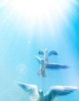 青空に飛び立つユリカモメ 22323001186| 写真素材・ストックフォト・画像・イラスト素材|アマナイメージズ
