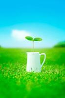 芝生の上のミルクカップと双葉