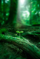 森の中の若葉と光