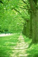 公園 22325000250| 写真素材・ストックフォト・画像・イラスト素材|アマナイメージズ