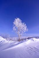 北極圏コールドフットの樹氷