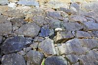 姫路城 白鷺城 姥ケ石 石垣 世界文化遺産遺産