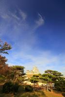 姫路城 白鷺城 大天守 紅葉 西の丸から撮影 世界文化遺産遺産