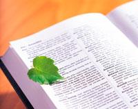 緑の葉と辞書