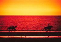 海岸の乗馬