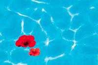 プールに浮かぶ赤い花