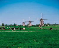 風車のある牧場
