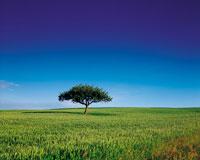 広大な草地に立つ一本の木