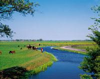 運河の流れる牧草地