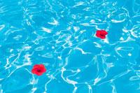 プールの波紋と赤い花