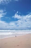 浜辺の海鳥と押し寄せる波と空と雲