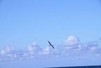 青空に舞う一羽のカモメ 22361004355| 写真素材・ストックフォト・画像・イラスト素材|アマナイメージズ