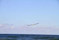 海辺の空に舞うカモメ 22361004356| 写真素材・ストックフォト・画像・イラスト素材|アマナイメージズ