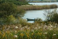 揖斐川 河川敷のススキと漁船