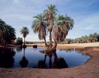 サハラ砂漠のオアシス
