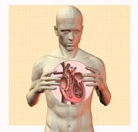 拡大された心臓と男性 CG