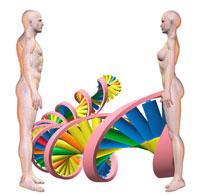 向い合う男女とDNAのイメージ CG