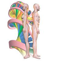 直立する男女とDNAのイメージ CG