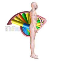 直立する男性とDNAのイメージ CG