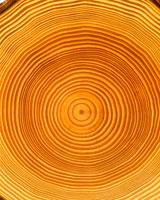 松の木の年輪イメージ CG