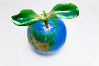 双葉と地球儀