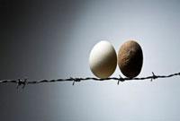 有刺鉄線の上の卵と石