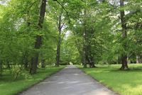木立と小道