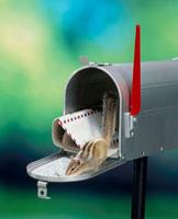 シマリスと郵便ポスト