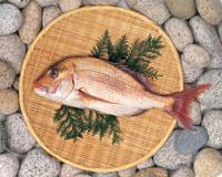魚介類 22451003253| 写真素材・ストックフォト・画像・イラスト素材|アマナイメージズ
