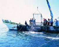 鮭定置網漁
