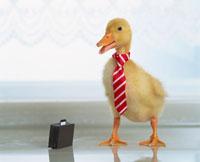 ネクタイをしたアヒル