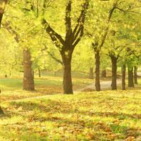黄葉の木々