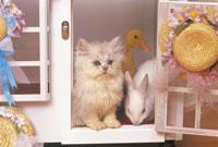 猫とウサギ 22451026630| 写真素材・ストックフォト・画像・イラスト素材|アマナイメージズ