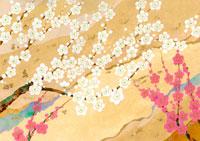 梅の花 イラスト