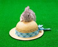 ウサギと麦藁帽子